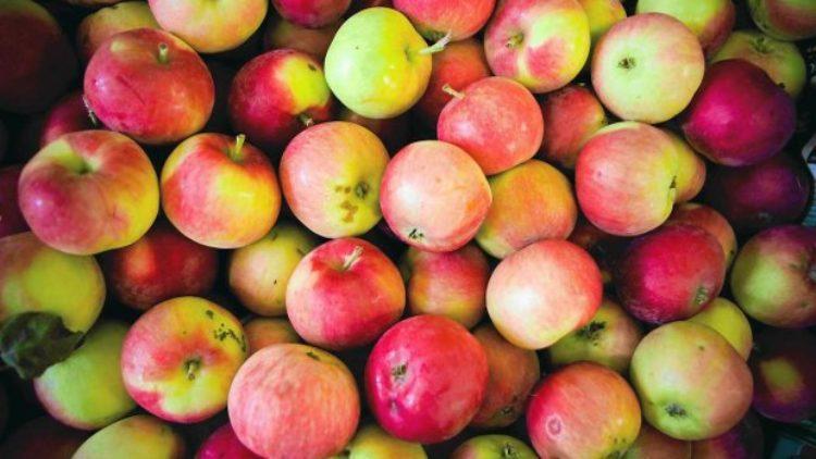 Darmowe jabłka dla mieszkańców