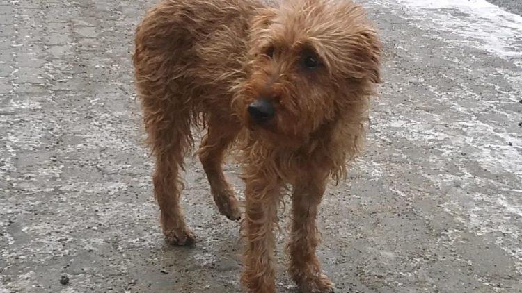 Zabłąkany pies w Iwoniczu-Zdroju