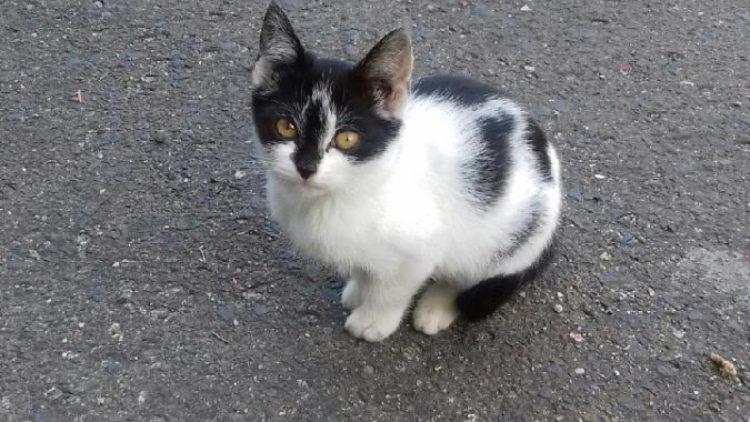 Znaleziono 2 małe kotki