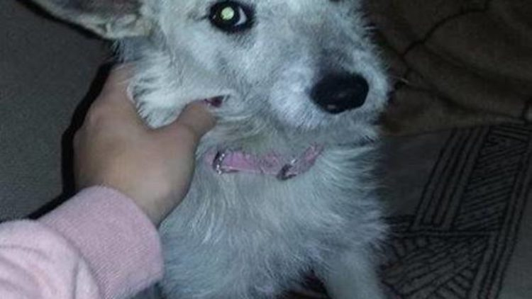 Zabłąkany pies w Iwoniczu