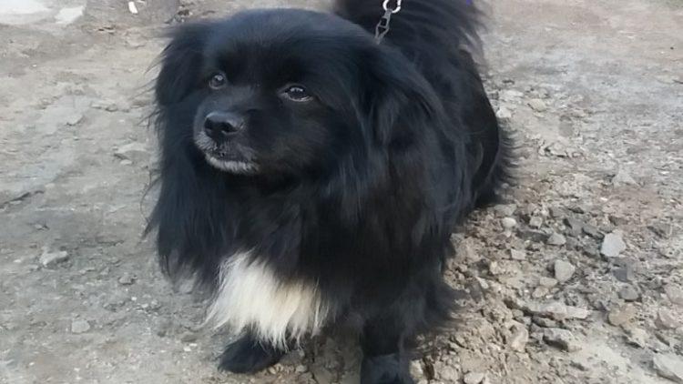 Znaleziono psa – poszukiwany właściciel