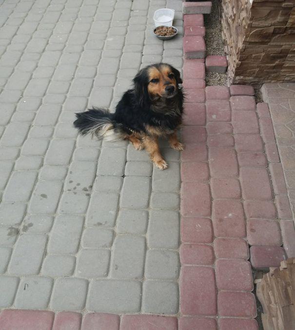 Zabłąkany pies