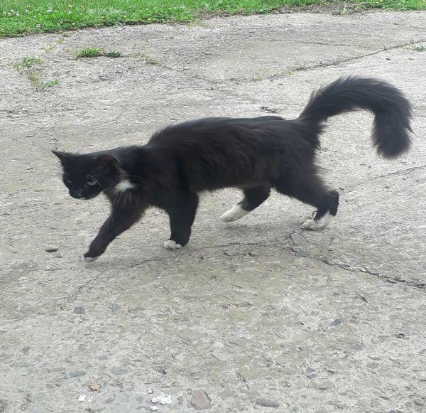 Zabłąkany kot w Iwoniczu