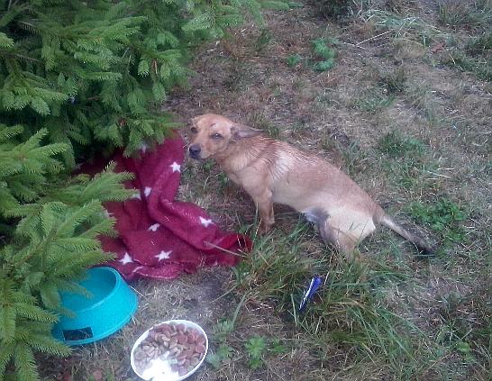 Ranny pies po kolizji drogowej znaleziony w Iwoniczu