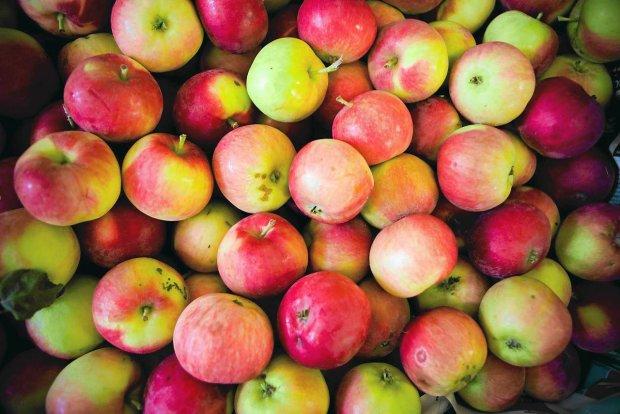 Jabłka dla mieszkańców Iwonicza
