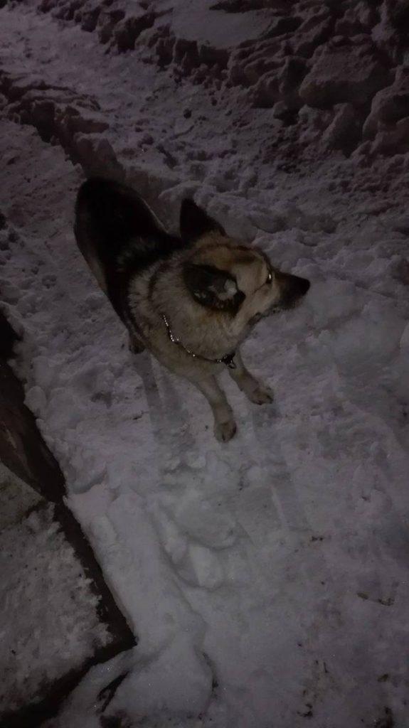 Pies Miejsce Piastowe