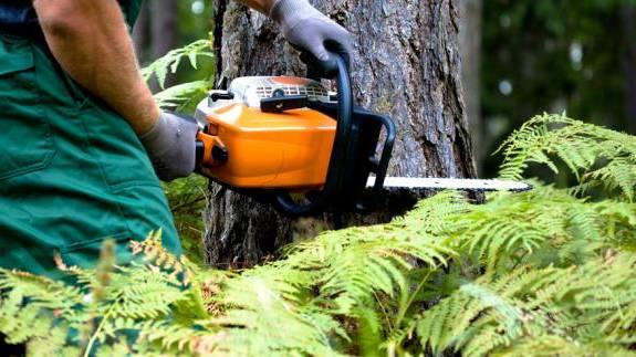 Usuwanie drzew z terenu nieruchomości – informacja dla właścicieli