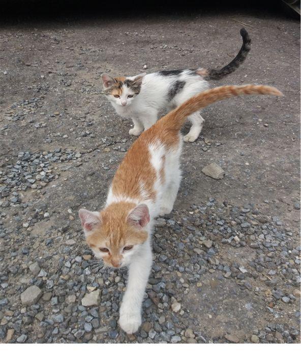 Uwaga! W Iwoniczu podrzucono dwa miesięczne koty