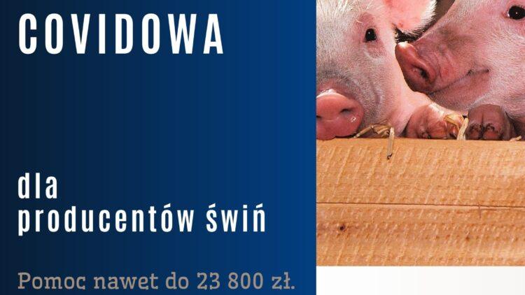 Nabór wniosków dla producentów trzody chlewnej, którym zagraża płynność finansowa w związku z Covid19