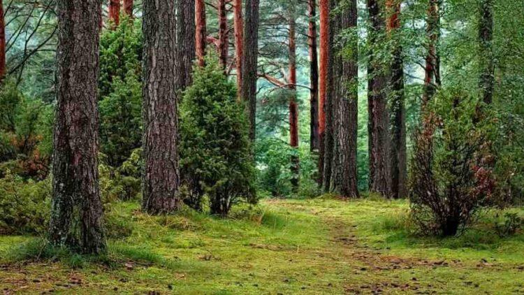Spotkanie Burmistrza Gminy z Dyrektorem Lasów Państwowych